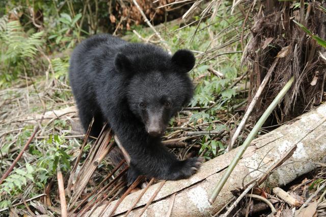 黑熊來了劇照 5