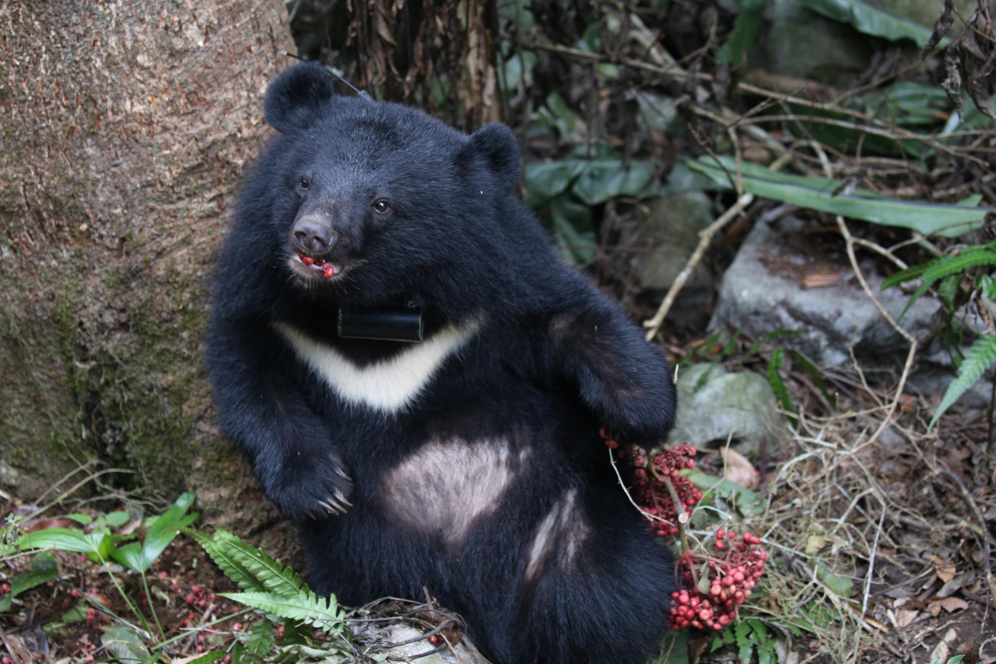 黑熊來了劇照 6