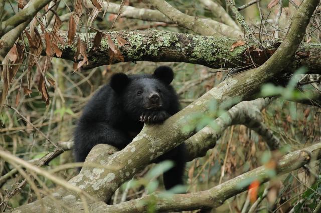 黑熊來了預告片 01