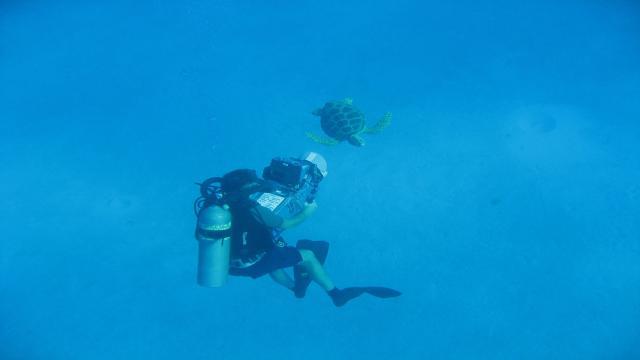 在海裡飛翔劇照 2