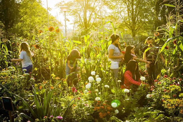 孩子們的菜園農場劇照 10