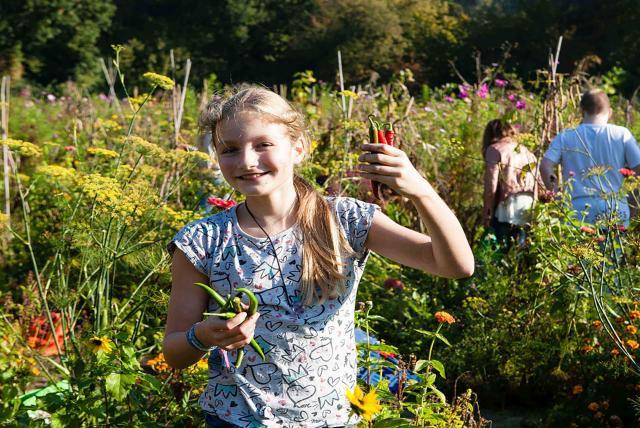 孩子們的菜園農場劇照 2