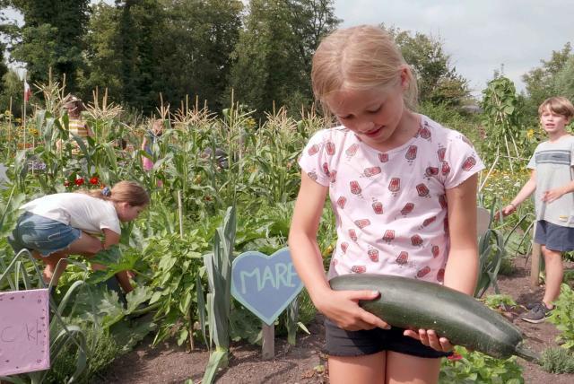 孩子們的菜園農場劇照 4
