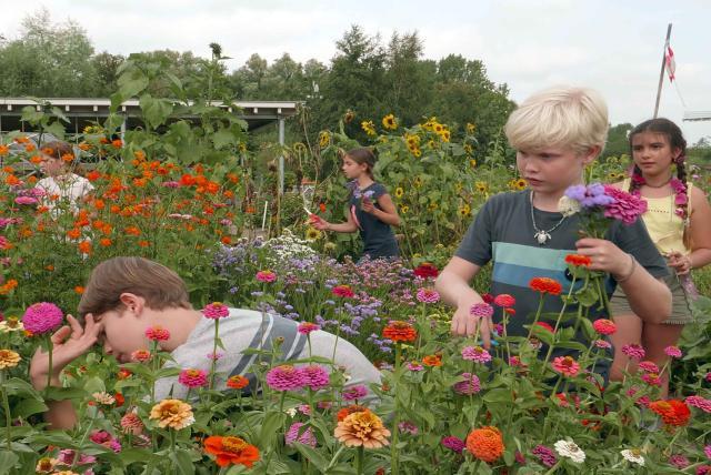 孩子們的菜園農場劇照 11