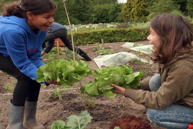 孩子們的菜園農場劇照 8