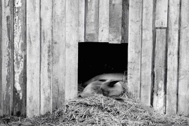 農場我的家劇照 2