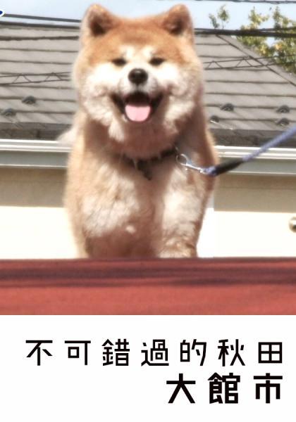 跟著柴犬Muco遊秋田-大館市線上看