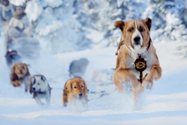 極地守護犬劇照 5