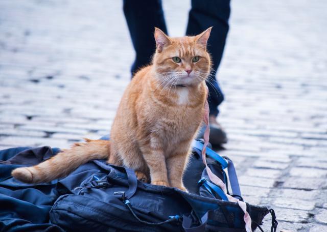 遇見街貓BOB劇照 3