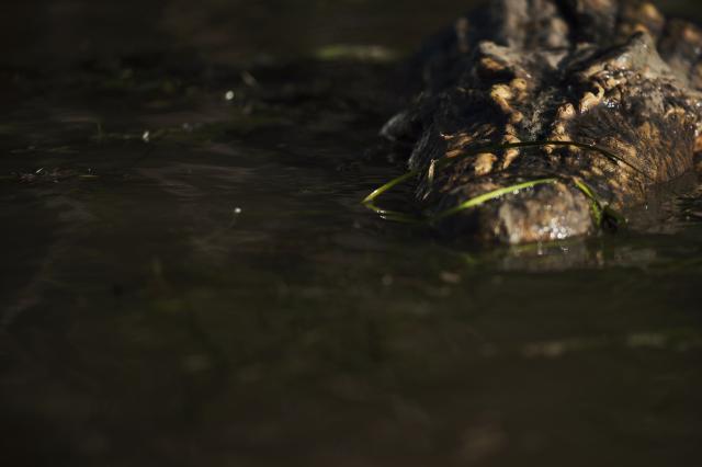 血鱷深淵劇照 2