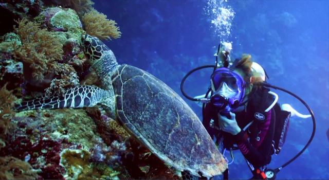 水下三十米 第一季第11集【西太平洋帛琉】 線上看