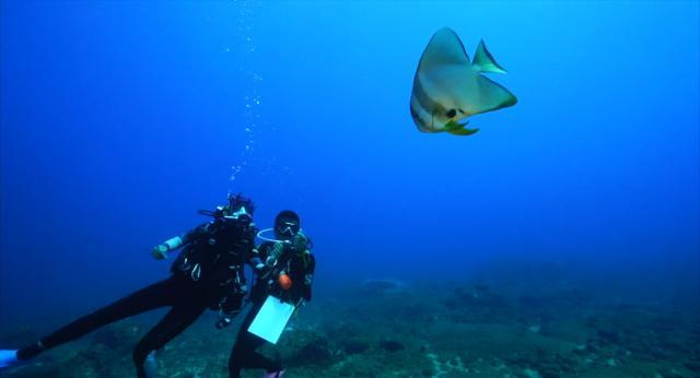 水下三十米 第二季第3集【澎湖】 線上看