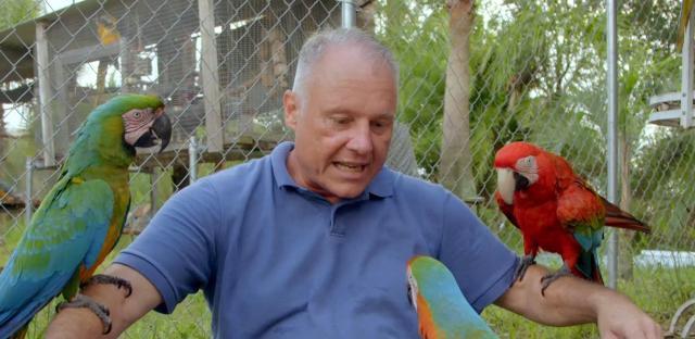 寵物出任務第1集【療癒鸚鵡】 線上看