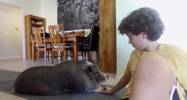 寵物出任務第7集【小豬瑪姬】 線上看