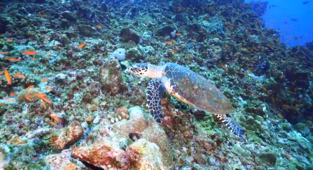 水下三十米 第三季第5集【印尼韋島】 線上看