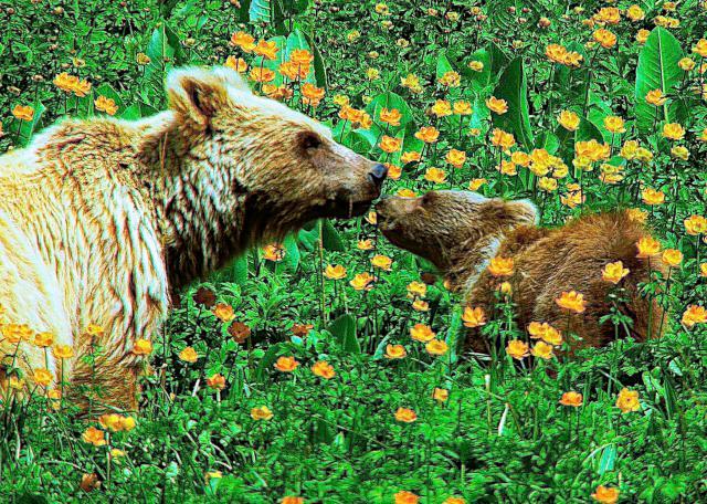 天山:熊的祖國預告片 01