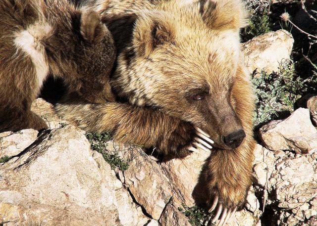 天山:熊的祖國劇照 2