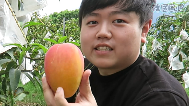 韓國歐巴 《去台南休閒農場採芒果》劇照 1