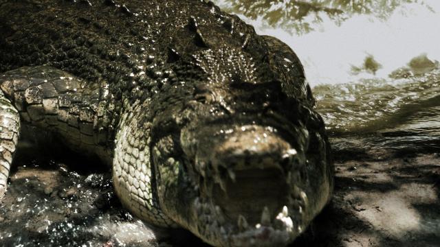 死水:黑鱷劇照 2