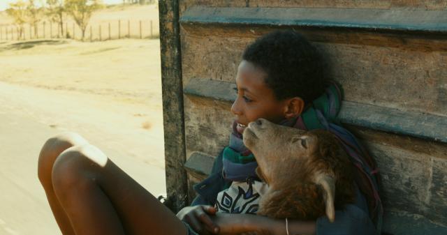 我與羊兒要回家劇照 2