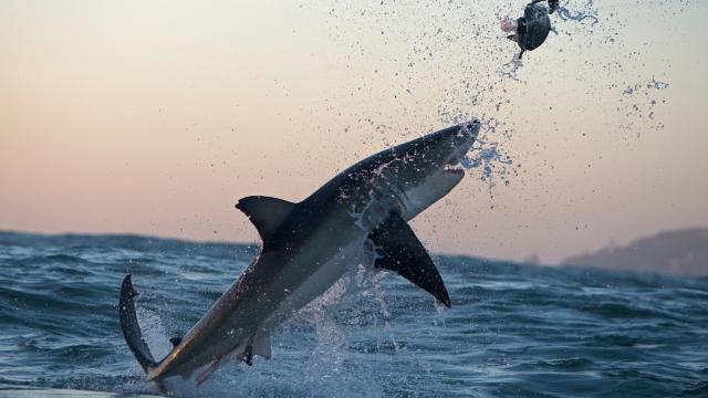 空中巨鯊的浩劫劇照 1