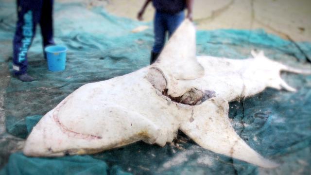 空中巨鯊的浩劫劇照 3