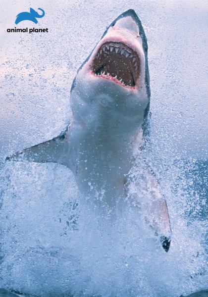 空中巨鯊的浩劫線上看