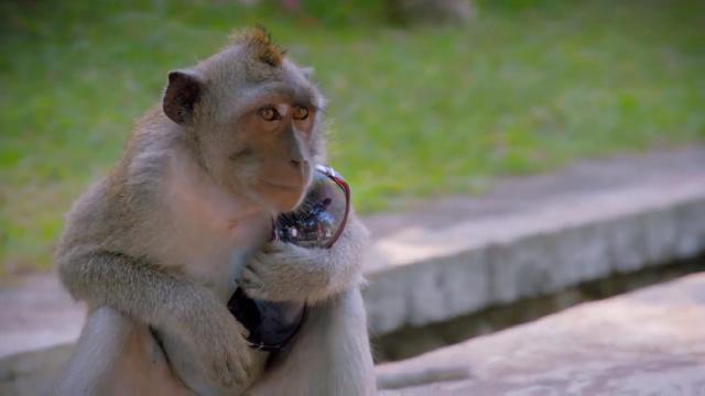 動物奇門功夫第22集【潑猴小偷】 線上看