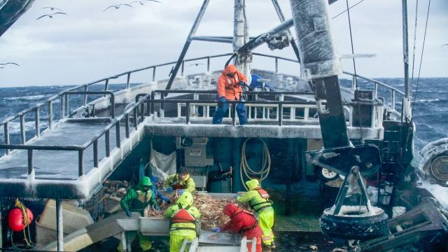 漁人的搏鬥 第十六季第17集【危險在身邊】 線上看