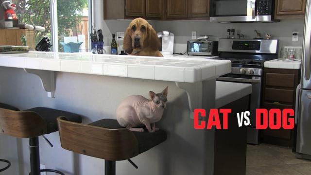 貓狗大戰劇照 1