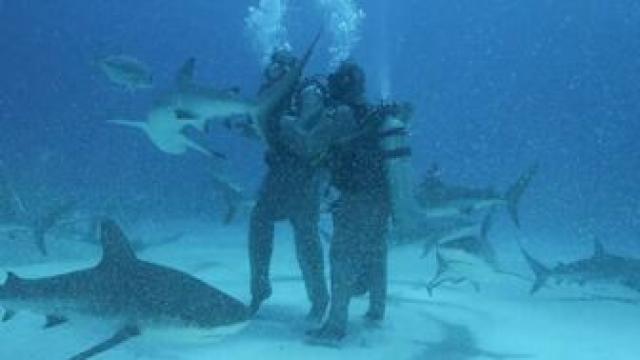 2021 鯊魚週劇照 1