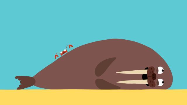 動物哇哈哈 第23集 螃蟹的靈活鉗劇照 1