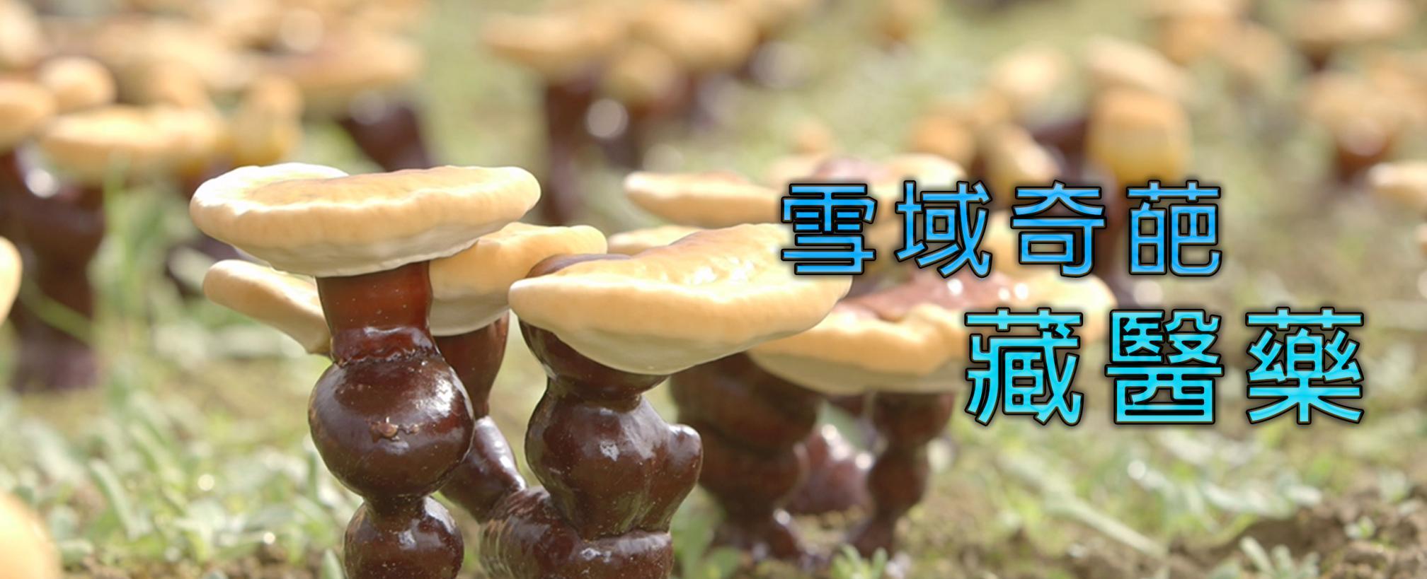雪域奇葩-藏醫藥劇照 1
