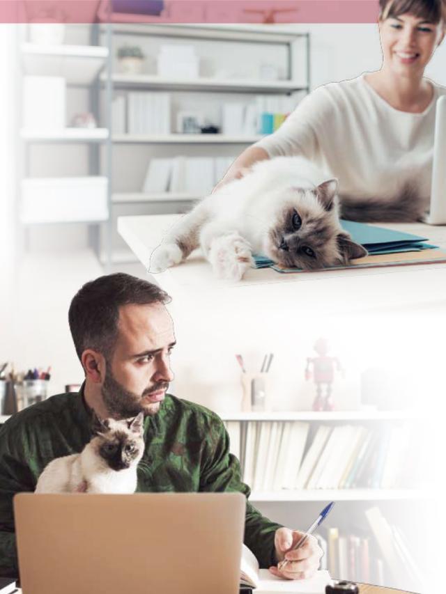寵物當家-寵物陪你工作fun輕鬆 (1)劇照 1