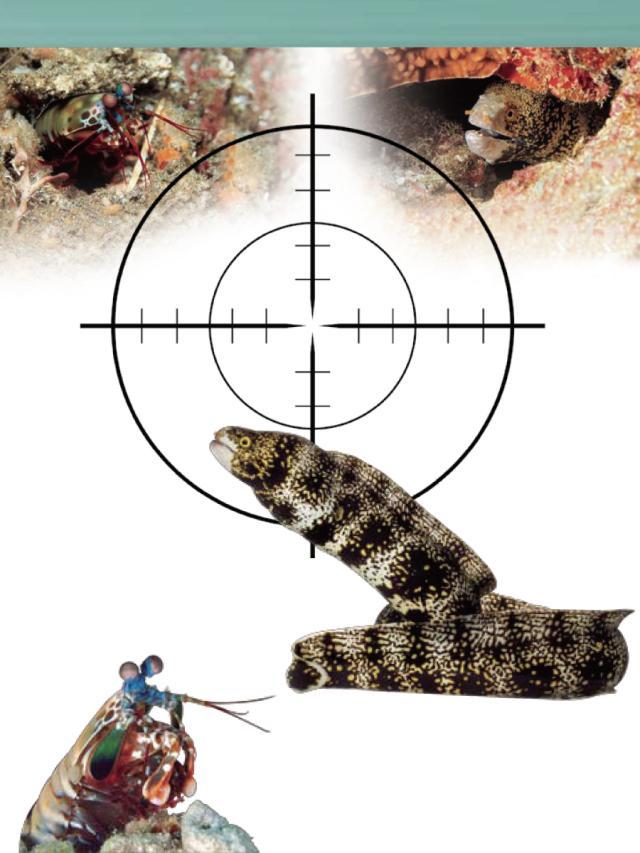 動物星球頻道-《秒殺獵手》(1)劇照 1