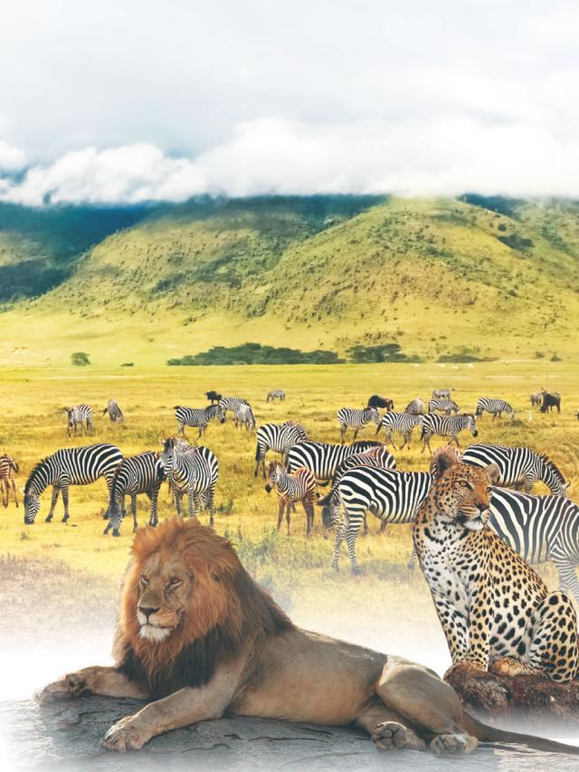 旅遊好去處--坦尚尼亞的探險之旅  (1)劇照 1