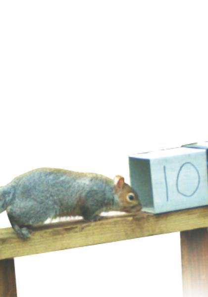克漏字 英國灰松鼠節育大作戰線上看