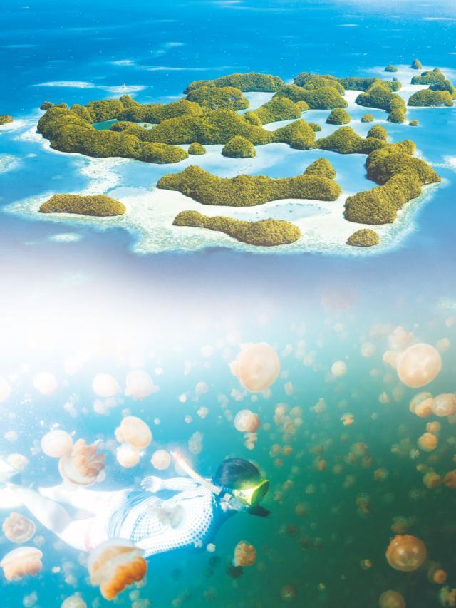 旅遊好去處 帛琉:太平洋上的天堂祕境 (2)劇照 1