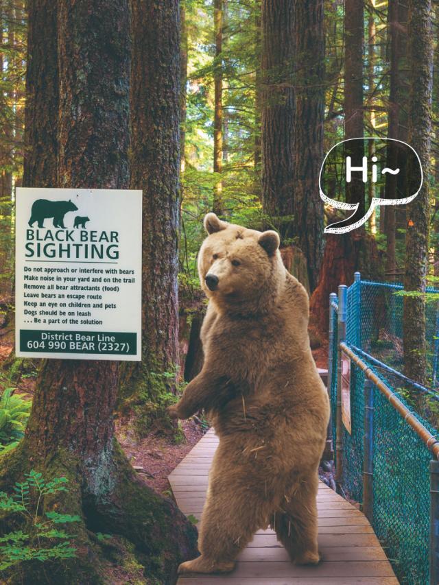 動物科學 為何在路上經常遇到熊?劇照 1