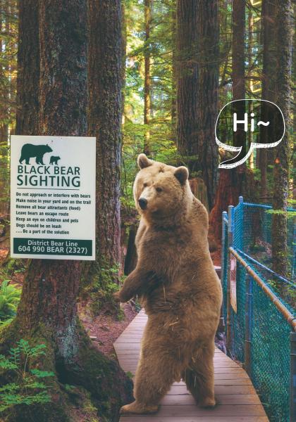 動物科學 為何在路上經常遇到熊?線上看