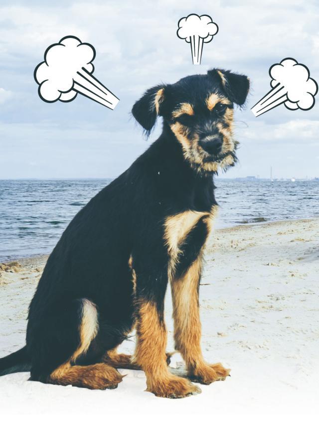 動物知識 狗狗也會吃醋嗎? (1)劇照 1