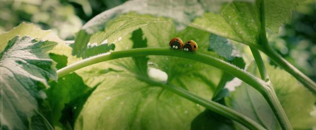 昆蟲LIFE秀電影版劇照 3