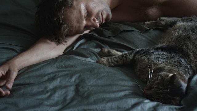 愛是一隻貓劇照 1