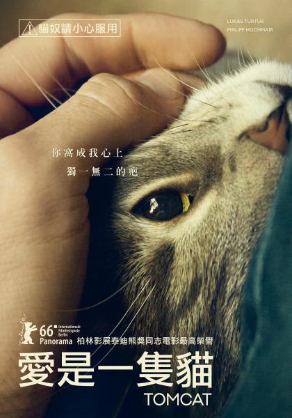 愛是一隻貓線上看