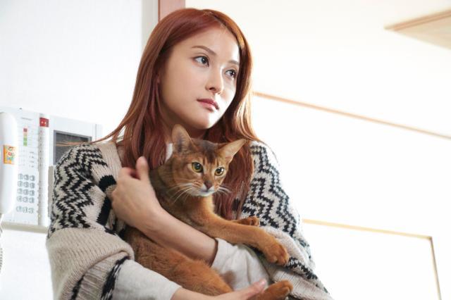 如何與貓告別劇照 1