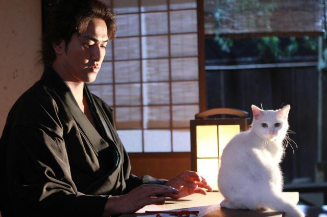 貓侍特別版第一季3 線上看