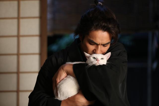 貓侍特別版第一季5 線上看