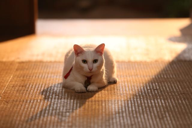 貓侍特別版第一季9 線上看