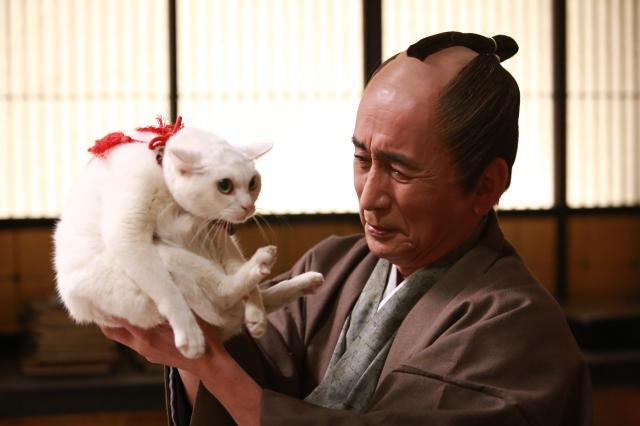 貓侍特別版第二季6 線上看