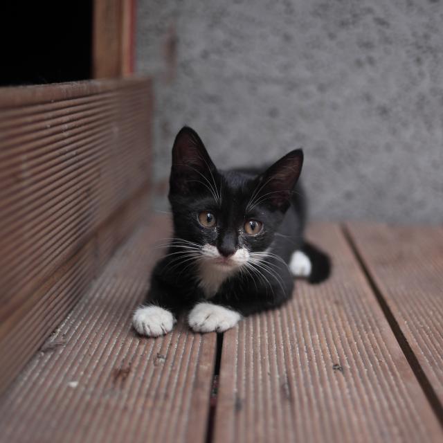 我是一隻貓劇照 2